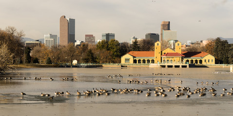 City Park Lake Denver Colorado Skyline Migrating Geese Birds Wildlife