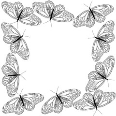 Butterfly line art black and white frame design for decoration artwork.