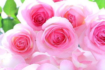 美しいピンクのバラのクローズアップ、バラの花びら背景,Beautiful bunch of pink roses on rose petals background