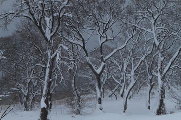 雪の琵琶湖畔