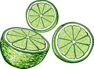 Hand drawn illustration of lime.