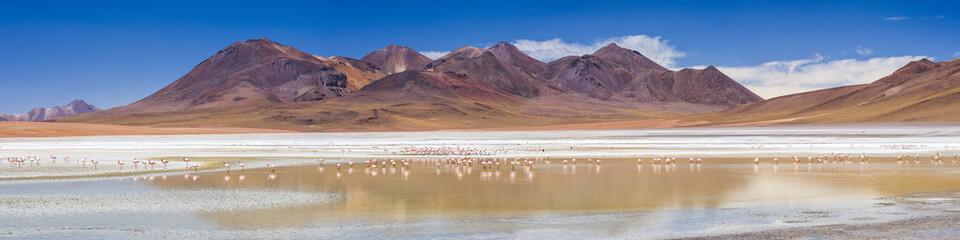 Flamingos at Laguna Hedionda, a salt lake area in the Altiplano of Bolivia, South America