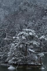 雪の廻り田池