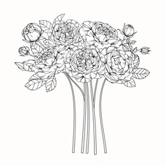 Bouquet set of rose flower by hand drawing on white backgrounds. Vector illustration