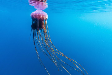 Unidentified large jellyfish in brash ice, Cierva Cove, Antarctica, Southern Ocean, Polar Regions