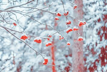 Rowan Branch During A Snowfall