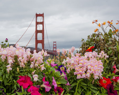 Golden Gate Bridge and flowers