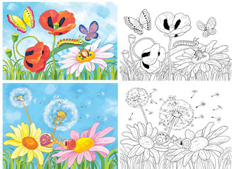 Coloring page. Cute flowers and insects. Poppies, daisies, butterflies, snails