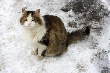 Cat in the snow.