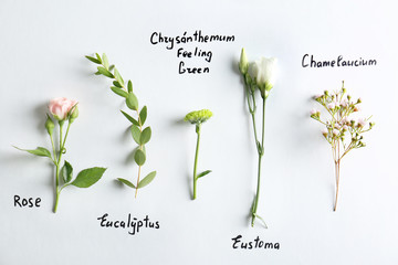 Collection of flowers on white background