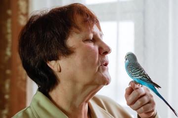Budgerigar (Melopsittacus undulatus) parrot sits on hands of a w
