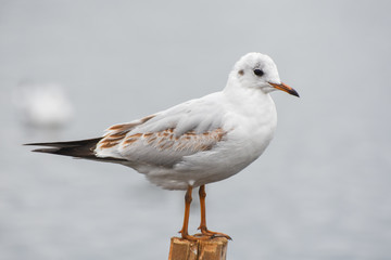 Seagull standing on a stump in marina.