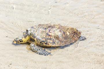 Sea Turtle dies on the beach