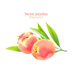 Watercolor vector peaches