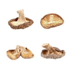 Dried shiitake mushrooms isolated on white background.