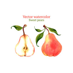 Watercolor vector pears