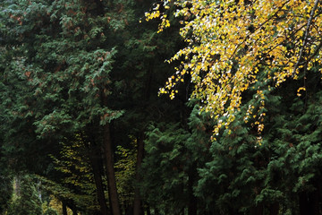 Yellow branch and green trees in the Park