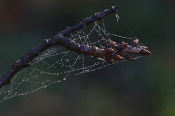 Tiny water droplets covering a spider web on a tree branch