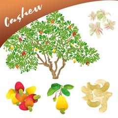 Cashew Set