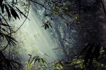 Photo sur Plexiglas Jungle Sunlight rays pour through leaves in a rainforest at Sinharaja F