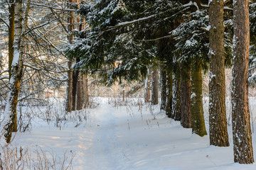 The trail on the snow-covered field