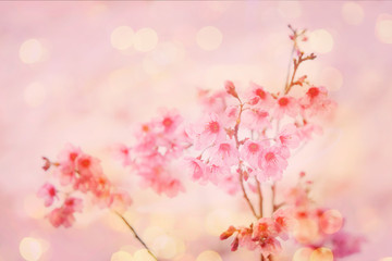 Soft focus of pink flower for sweet valentine background.