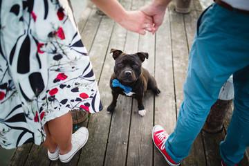 dog wiht blue ribbon