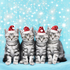 Cute kitten with santa hats