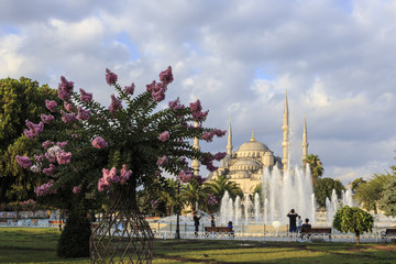 Flowering tree and families in Sultanahmet Park in front of the Blue Mosque, August early morning, Sultanahmet, Istanbul, Turkey, Europe