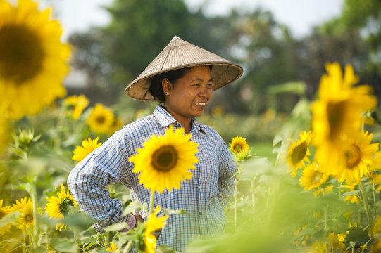A woman working in a sunflower field near Myitkyina in Kachin State