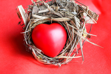 Red Love hart in bird nest