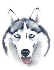 Dog watercolor painting husky breed  illustration isolated on white background