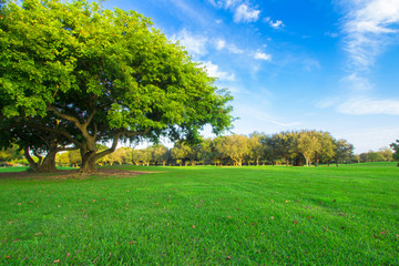Beautiful green golf field with a blue sky and massive green tree