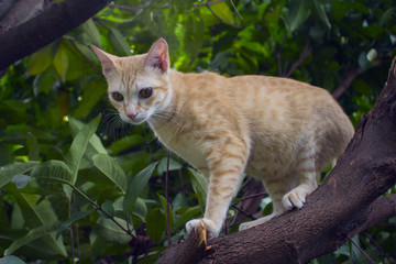 Red kitten on a tree branch with greenery. Domestic pet traveling in garden