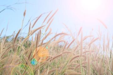 summer grass with landscape, sunlight sky,natural background
