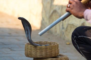 street live India snake charmer
