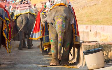 street live India elephant