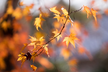 Fall in Tofukuji Temple, Kyoto, Japan