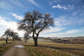 Winter Landscape / Winter without snow .