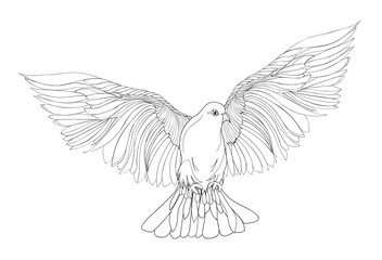 Dove in free flight. Isolated vector on white background.
