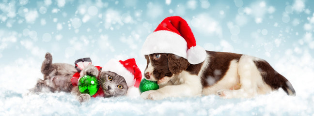 Christmas Puppy and Kitten in Snow