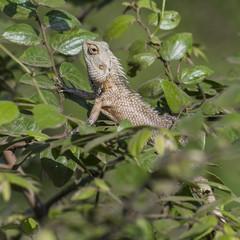 Lizard close up macro animal portrait