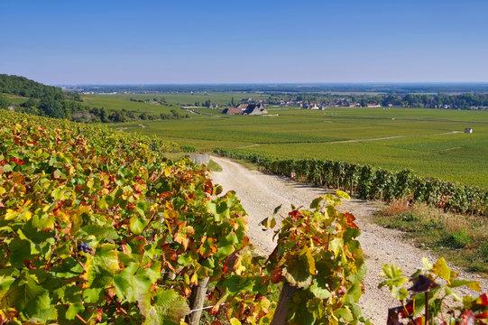 Chateau du Clos de Vougeot, Burgund - Chateau du Clos de Vougeot, Cote d'Or, Burgundy