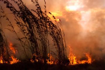 Sunset Wild Fire