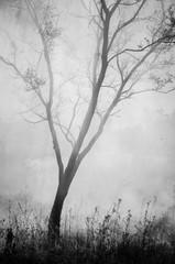 Wildfire Smoke Silhouetted Tree