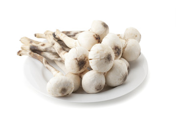 Termitomyces mushroom or termite mushroom