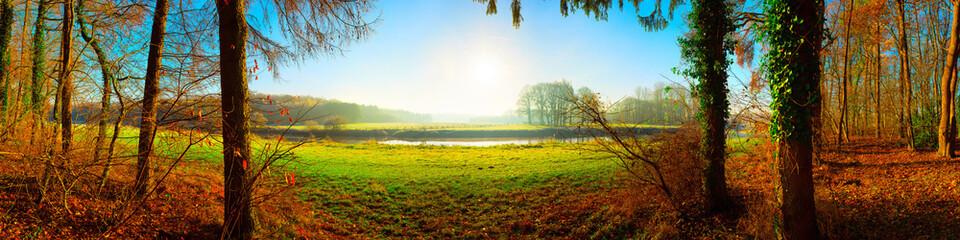 Wald im Herbst mit Blick auf eine grüne Wiese im Sonnenschein