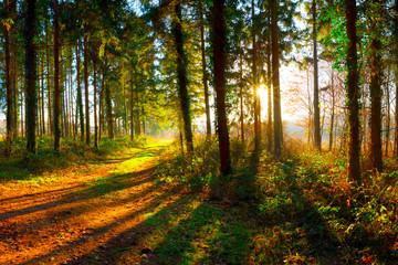 Weg durch den Wald bei strahlendem Sonnenschein