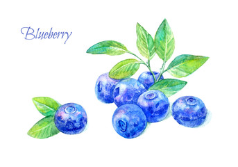 Postcard of a blueberry.Forest berry.Watercolor hand drawn illustration.White background.