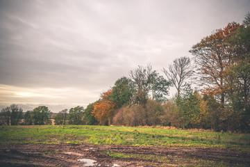 Muddy wheel tracks on a field